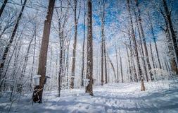В лес клена стоковая фотография rf