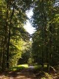 В лес Стоковая Фотография