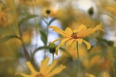 В желтых тонах Стоковая Фотография RF