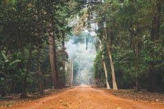 В джунгли Стоковое фото RF