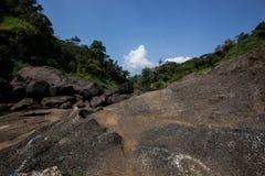 в джунглях Стоковое Изображение RF