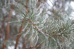 В заморозке Стоковые Фотографии RF
