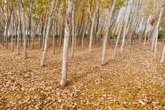 В зиме, желтое дерево выходит в древесины Стоковые Изображения