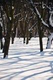 В зиме парк в солнце после полудня Стоковые Изображения