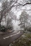 В зимнем времени парка стоковая фотография rf