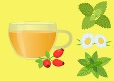 вливания horsetail фокуса equisetum чашки arvense чай стеклянного травяного naturopathy селективный Иллюстрация вектора