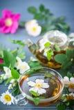 вливания horsetail фокуса equisetum чашки arvense чай стеклянного травяного naturopathy селективный Стоковые Изображения