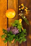 вливания horsetail фокуса equisetum чашки arvense чай стеклянного травяного naturopathy селективный Стоковое Фото