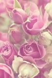 Влияние года сбора винограда роз Стоковое Изображение RF