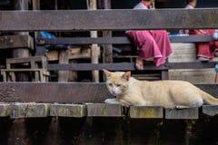 влияние голубого прибора кота камеры цифровое формирует радиацию фото модели изображения жары ультракрасную делая не реальное уса Стоковое Изображение RF