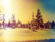 Влияние фильма Зима в горах Свежий снег порошка покрыл деревья в горах За минуту до захода солнца Chill вечер Стоковые Изображения