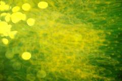 Влияние фильма Defocused цветки и трава для предпосылки Запачканный и de сфокусировал свежее желтое цветение и зеленые листья чер Стоковые Фотографии RF