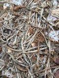 Влияния зим Стоковое фото RF