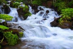 В красивом зеленом лесе на огромных утесах быстрый tempestuous водопад горы пропускает Стоковое Изображение RF