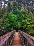 В лес стоковые изображения