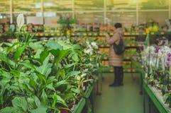 В магазине розничной торговли женщина из фокуса извлекает заводы Садовничать в парнике стоковые фото