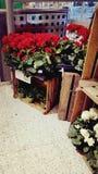 В магазине стоковые изображения rf