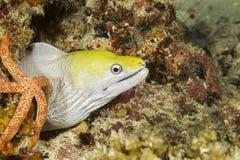 В Мальдивах, желтая рыба которая приходит из коралла очень интересна Стоковая Фотография