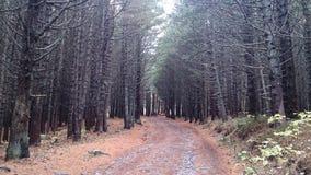 В малом лесе Стоковое Фото