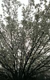 В море вишневых цветов Стоковая Фотография