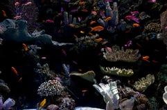 В океане стоковое изображение rf