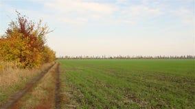 В дороге поля Русское поле сток-видео