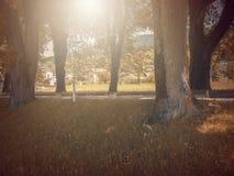 В осени Басня фантазии в парке с сценой восхода солнца стоковое фото rf
