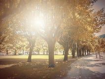 В осени Басня фантазии в парке с сценой восхода солнца стоковая фотография rf