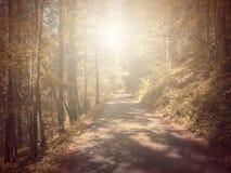 В осени Басня фантазии в парке с сценой восхода солнца стоковое изображение rf