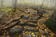 В осень Стоковые Изображения RF