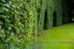 В парке Зеленые кустарник и утес Травы в луге на заходе солнца Стоковые Фотографии RF
