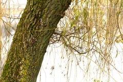 В парке озером Стоковые Фото