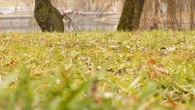 В парке озером Стоковая Фотография