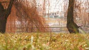 В парке озером Стоковое Изображение