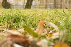 В парке озером Стоковое фото RF