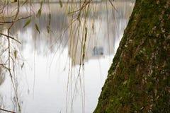 В парке озером Стоковая Фотография RF