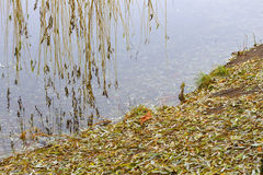 В парке озером Стоковые Фотографии RF