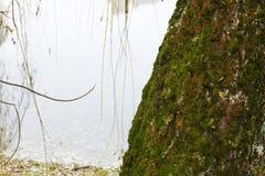 В парке озером Стоковые Изображения