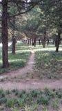 В парке Стоковые Изображения RF