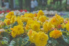 В парке flowerbed солнечного дня желтых цветков Стоковое фото RF
