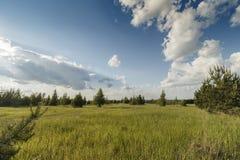 В поле Стоковая Фотография RF