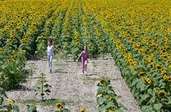 В поле солнцецвета Стоковые Изображения