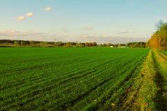 В поле Стоковые Фото