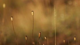 В поле, Стоковая Фотография