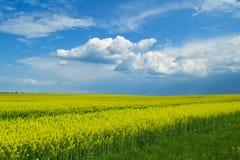 В поле Стоковые Фотографии RF