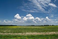 В поле Стоковое Изображение RF