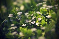 В поле wildflowers grow_2 Стоковые Фотографии RF