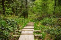 В прикарпатском лесе Стоковые Фото