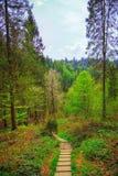 В прикарпатском лесе Стоковая Фотография RF