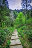 В прикарпатском лесе Стоковые Изображения RF